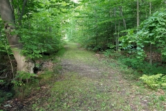 Walking-Trails-1-Lake-Leelanau-Retreat-House